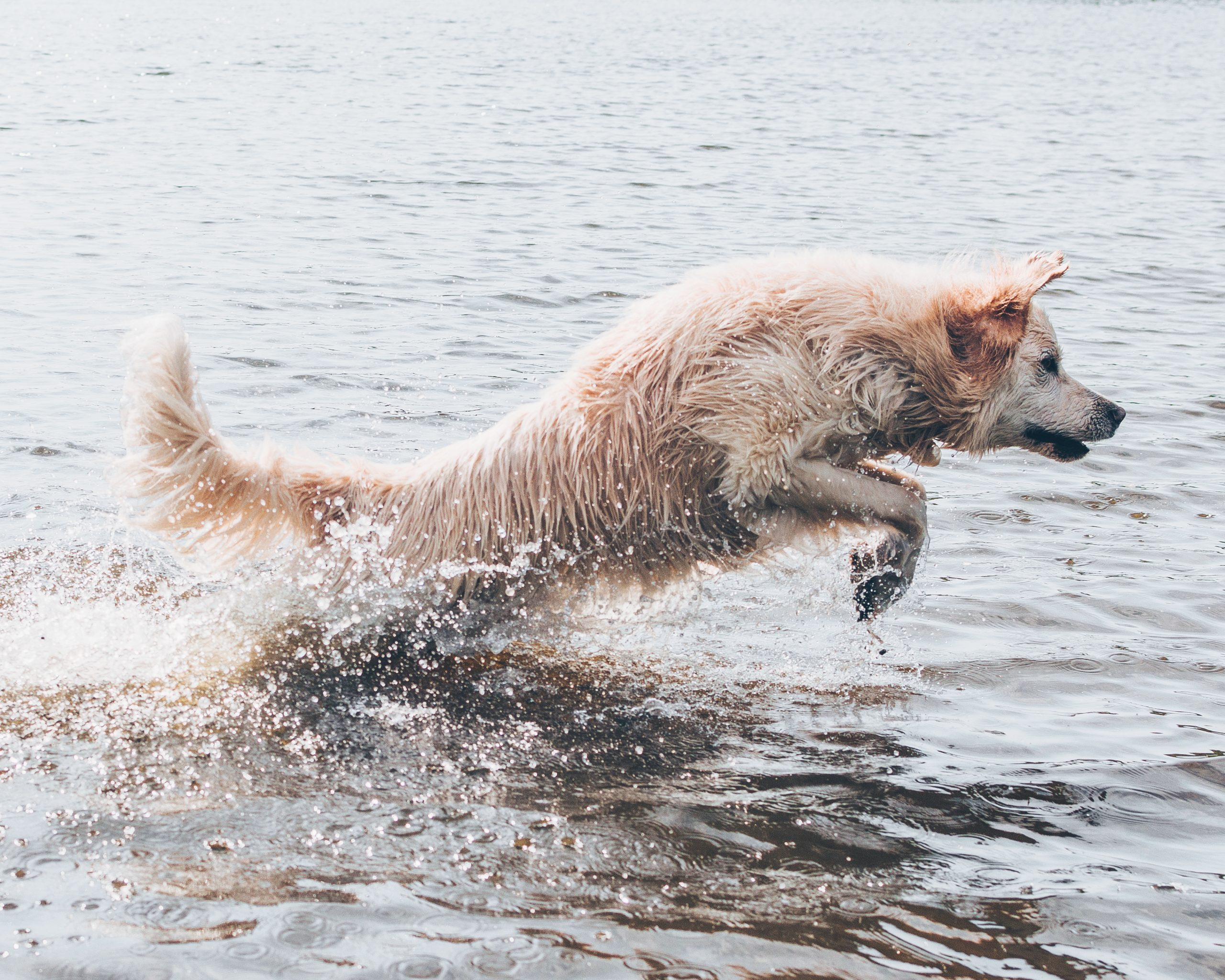 Saltwater Poisoning in Dogs